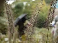 [スタッフレポート]「第6回 植物探検隊@秋の待兼山を訪ねて」を開講しました!
